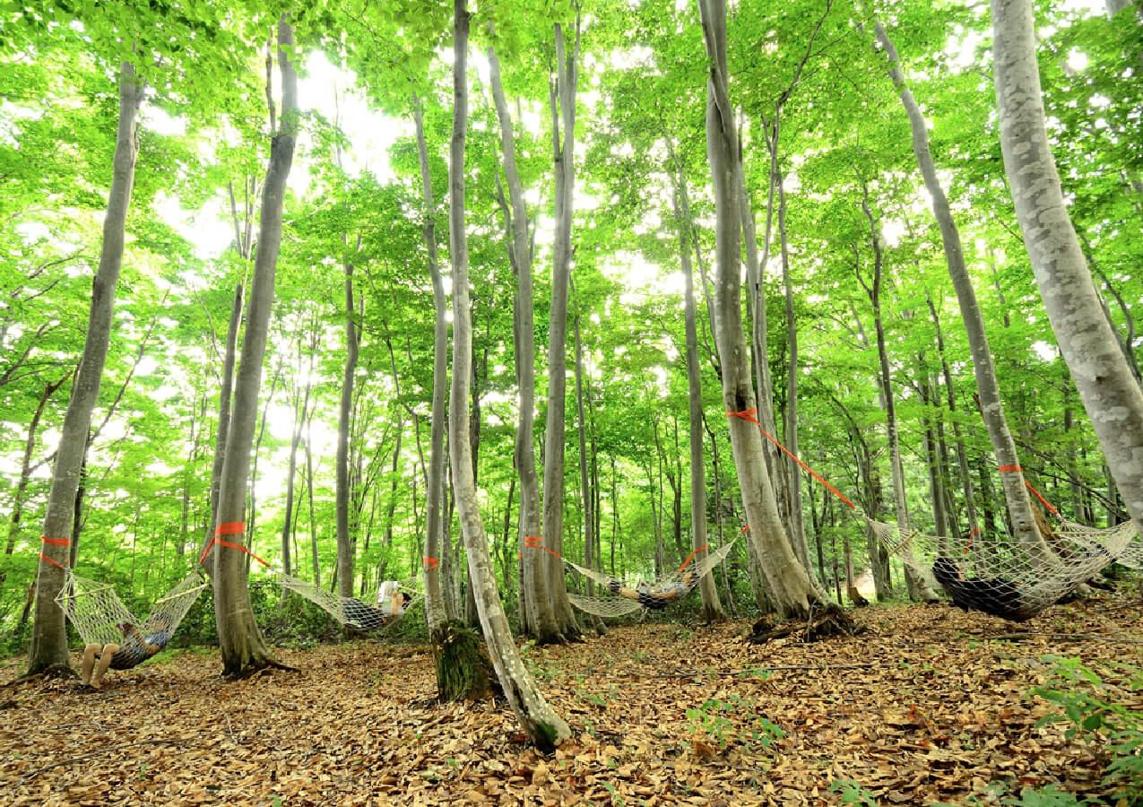 なべくら高原 森の家 イメージ